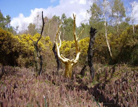 L'arbre d'or à Brocéliande