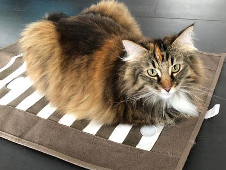 Cat Activity Spiel von Trixie