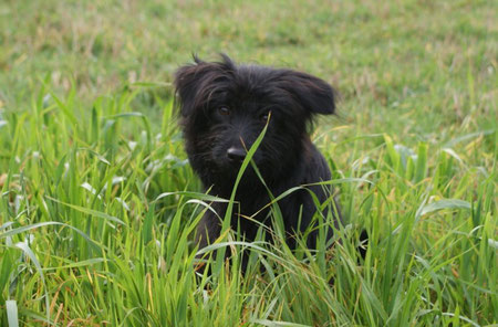Newt im November 2009 Sie ist 6 Monate jung.