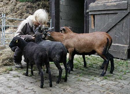 """Die """"Schäferin"""" mit ihrer Herde"""