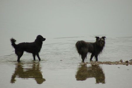 Lady und Ronja am Mooshammersee