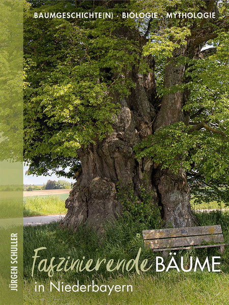 Judasbaum im Wiener Stadtpark
