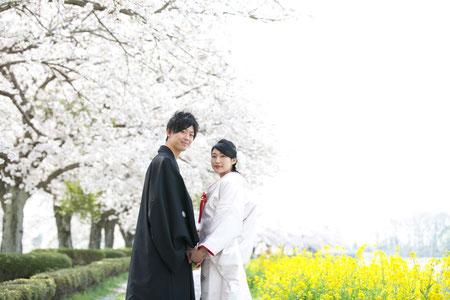 桜並木ロケーションフォト 栃木