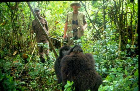 Mit den Gorillas unterwegs, war sehr beeindruckend