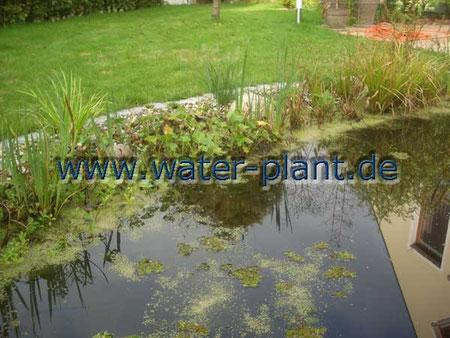 mit Pflanzmatten gestaltete Uferzone am Gartenteich