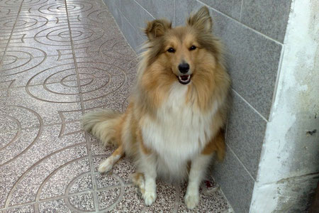 Vicky (Lassie) of Atocha