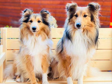 Kyra (Bailey) und Lilly Lou (Lexie) of Atocha
