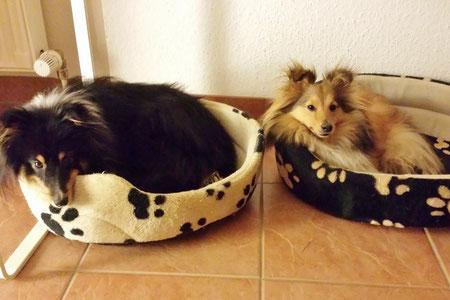 Scotty und seine Freundin Stella of Atocha