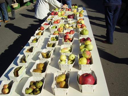 Alte und regionale Obstsorten (Äpfel) zum Verkauf beim Ilhorner Apfeltag des Streuobstvereins, in dem Knust GaLaBau sich engagiert.