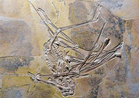 Flugsaurier a. Wattendorf