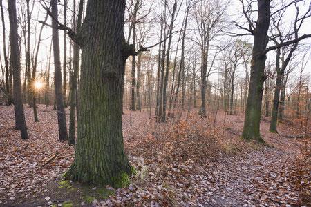 Familienausflugstipps Bad Freienwalde Oderbruch Oderland Wandern