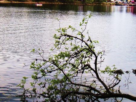 Am See im Schwarzwald