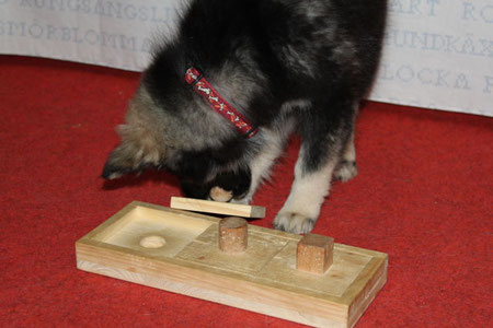 Lapinkoira Rilla mit Holzspiel