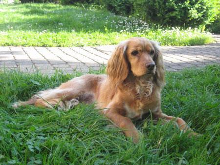 Amy - Hund von Rahel