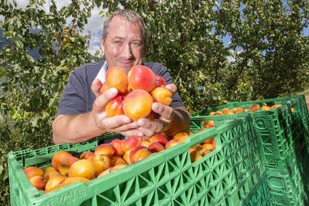 Fabrice Fruits - Gaillard Fabrice