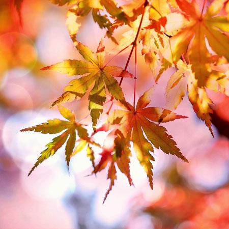 Herfst, heerlijk er op uit.