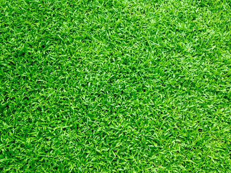 Het gras van de buren.