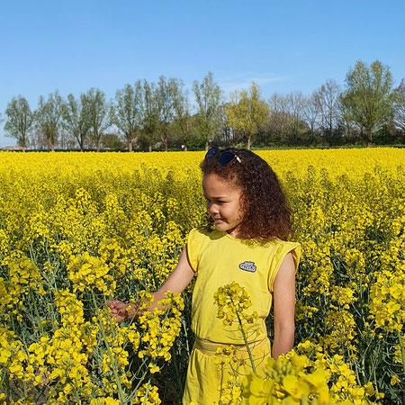 Koolzaadvelden, Groningen, Bloemenvelden groningen, Oost-Groningen bloemenvelden
