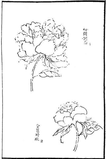 Grande fleur de pivoine. 1. Entrouverte et vue obliquement. 2. Bouton entrouvert.