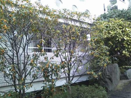 K Yoga Studio, 裏庭