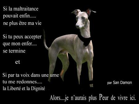 Oeuvre de San Damon offerte au Parti Animaliste Français (cliquez sur l'oeuvre pour aller sur le site)
