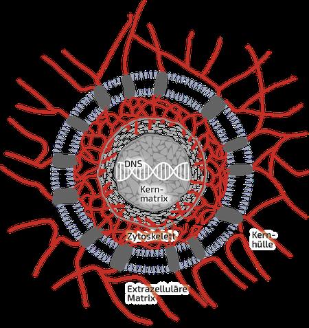 Modernes Bild einer Zelle und ihrer Verbindungen: die lebende Matrix
