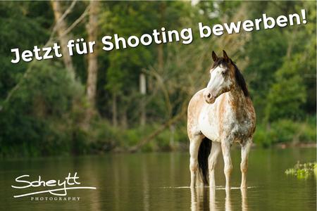 Bewirb Dich jetzt für ein Pferdeshooting mit Deinem Liebling :)