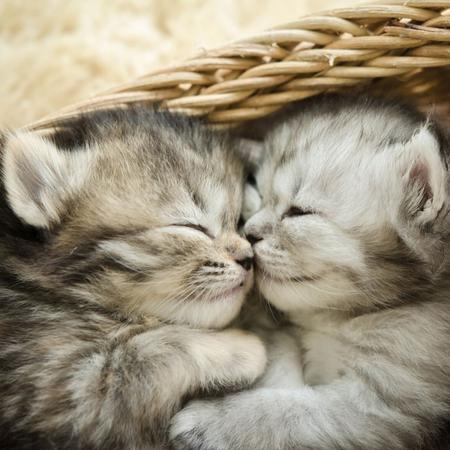 Kittens, nest kittens, katten, poezen.