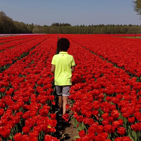 Tulpen, Drenthe, Tulpenroute.