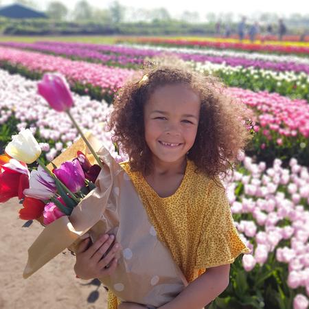 Tulpenroute, tulpen, bollenvelden, drenthe, tulpen plukken, tulpenpluktuin, beilen.