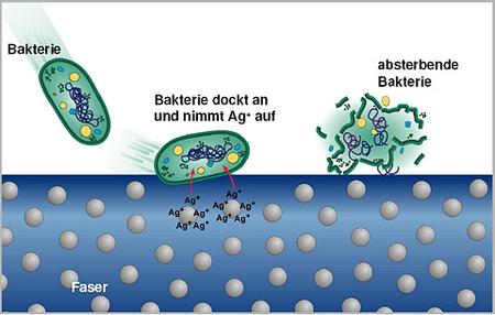 Zeichnung zur Funktionsweise der Bioactive Faser. Bakterien werden durch Silberionen in der Faser geschädigt und sterben ab.