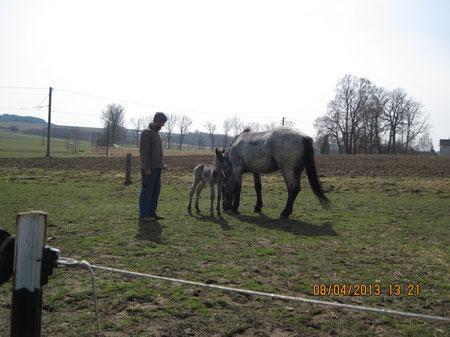 Thor mit Campari - Das erste Mal auf der Weide