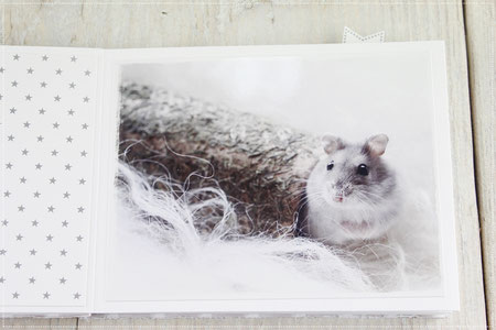 Hamster, Minialbum, scrappen