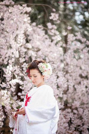 しだれ桜が満開☆お嫁様すごく美しいです☆