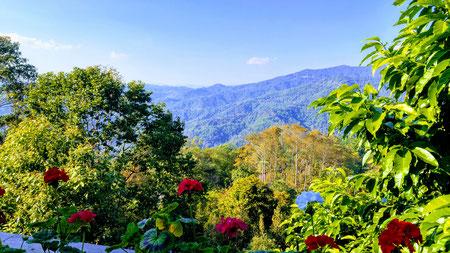 View from Doi Tung Royal Villa
