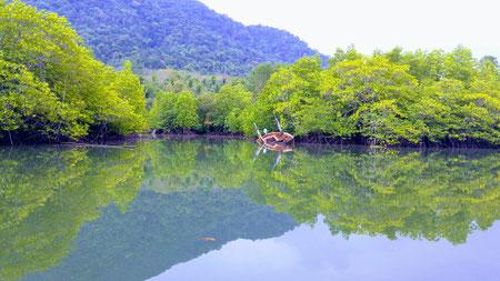 Mangrove Forest, Ko Chang