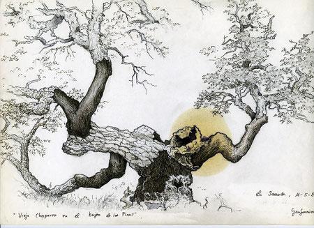 Chaparro en el bujeo de los pinos