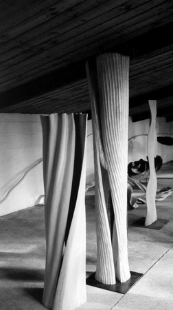 sycomore - erable 1m60cm & 1m90cm ©Isabelle Dethier