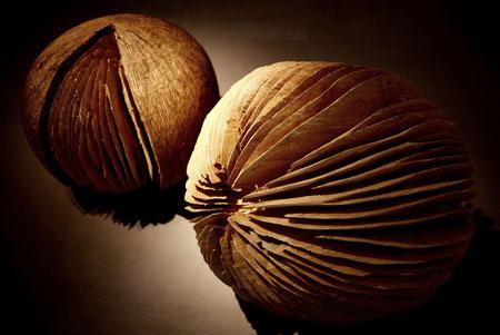 willow -saule : 50cmx 60cm ©Isabelle Dethier