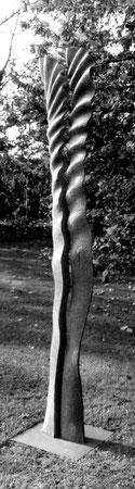 Pear wood poirier 2m 18 cm ©Isabelle Dethier