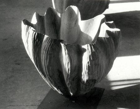 willow - saule :70cm x70cm © Isabelle Dethier