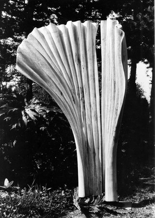 Sycamore wood  érable 1m80cm + stand ©Isabelle Dethier Photo © Helene de Mevius
