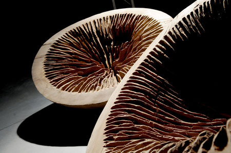 plane wood 90 cm- platane ©Isabelle Dethier