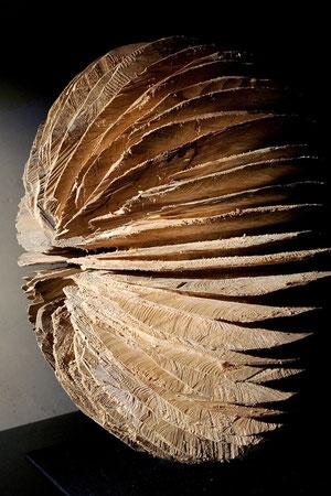 willow - saule :53cm x55 cm©Isabelle Dethier