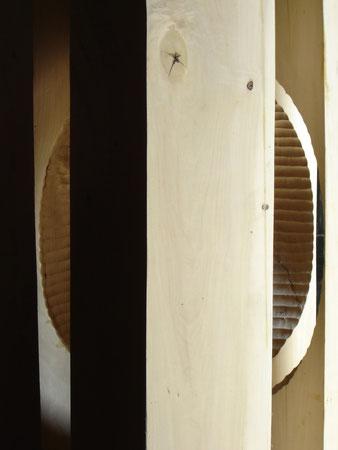 popolar wood-peuplier 2meters ©Isabelle Dethier