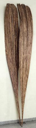 Oak-chene 2m50 cm ©Isabelle Dethier photo ©Luc Schrobiltgen