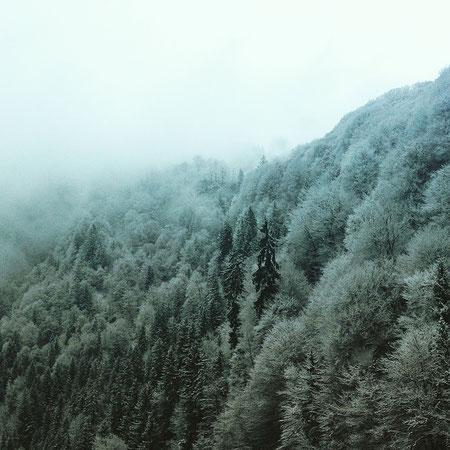 Inkalude - Wald