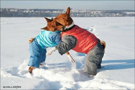 Одежда для собак воронеж