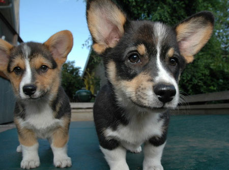 Luna and Toad as Puppies