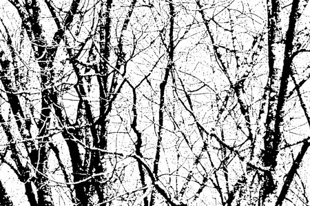 Forêts /Aline Siffert